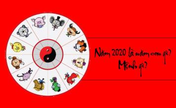 năm 2020 là năm con gì