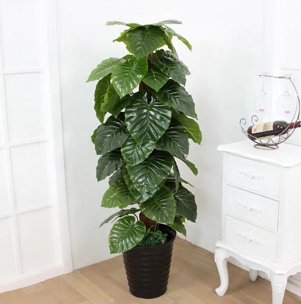 Cây trầu bà - các loại cây trồng trong nhà tốt nhất