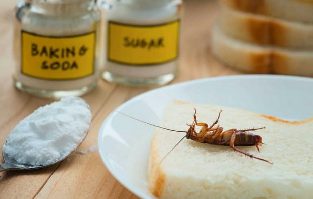 cách diệt gián bằng baking soda