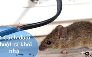 cách đuổi chuột ra khỏi nhà vĩnh viễn hiệu quả