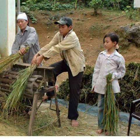 hình ảnh tuổi thơ dữ dội - tuốt lúa bằng máy đạp chân