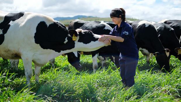 các trang trại bò sữa của vinamilk