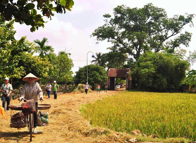 Hình ảnh làng quê Việt Nam 012