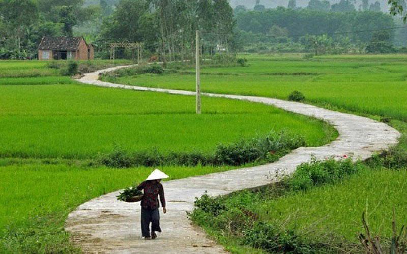 Hình ảnh làng quê Việt Nam 015