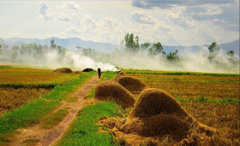 Hình ảnh làng quê Việt Nam 020