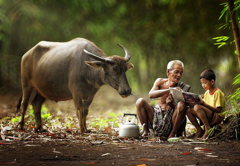 Hình ảnh làng quê Việt Nam 02