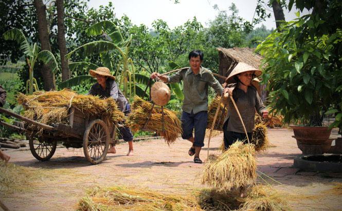 Hình ảnh làng quê Việt Nam 029