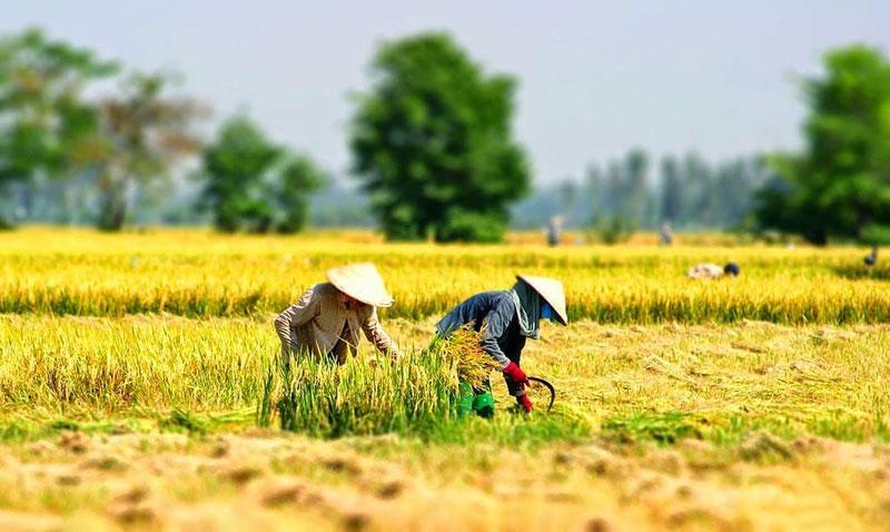 Hình ảnh làng quê Việt Nam 03