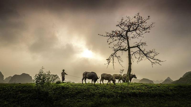 Hình ảnh làng quê Việt Nam 031