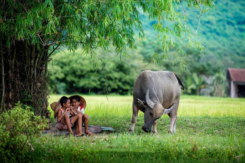 Hình ảnh làng quê Việt Nam 033