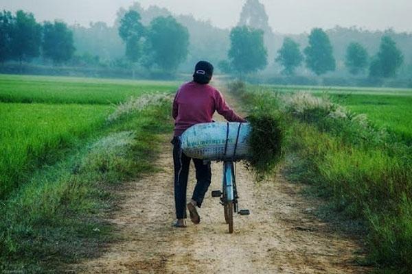 Hình ảnh làng quê Việt Nam 035
