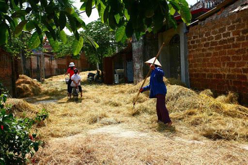 Hình ảnh làng quê Việt Nam 039
