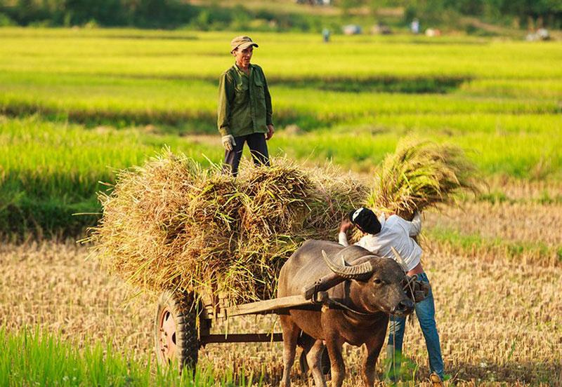 Hình ảnh làng quê Việt Nam 04