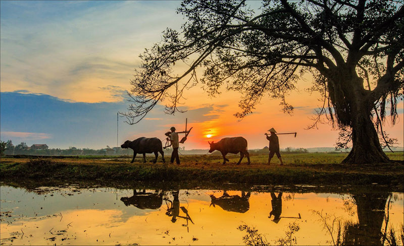 Hình ảnh làng quê Việt Nam 05