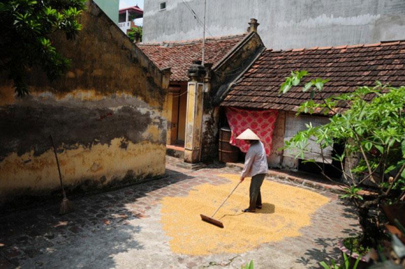 Hình ảnh làng quê Việt Nam 08